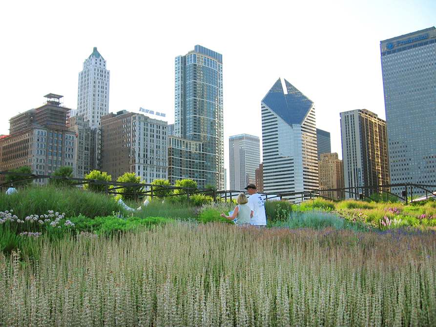 garden surrounded by silver skyscrapers