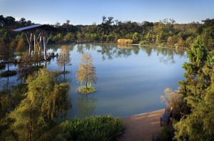 Lake with floating trees, lsu landscape architecture alumni design