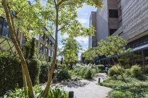 lsu robert reich courtyard