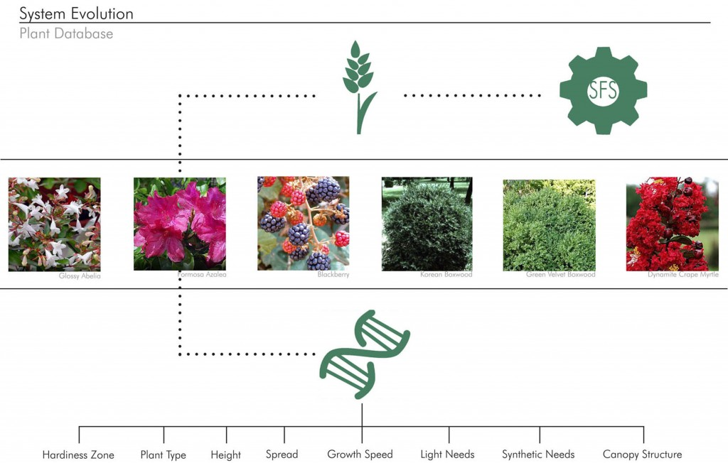 System Evolution of plants with images