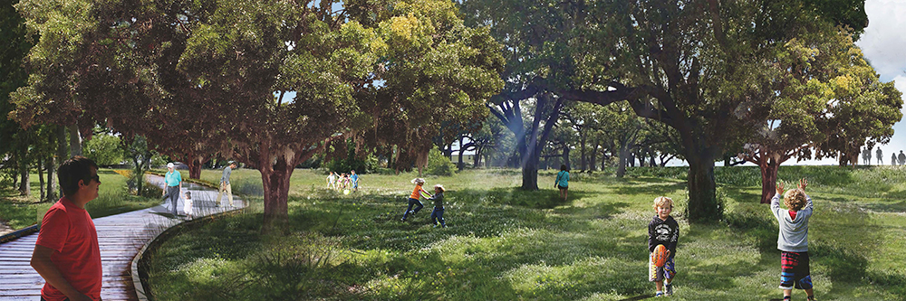 Design of park with boardwalk through trees, families playing. LA 4008 Advanced Topics Studio work