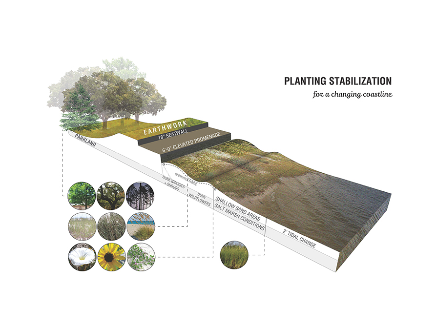 Planting stabilization for a changing coastline, with earthwork, seawall, elevated promenade, shallow sand areas, tidal change, salt marsh conditions indicated. LA 4008 Advanced Topics Studio design