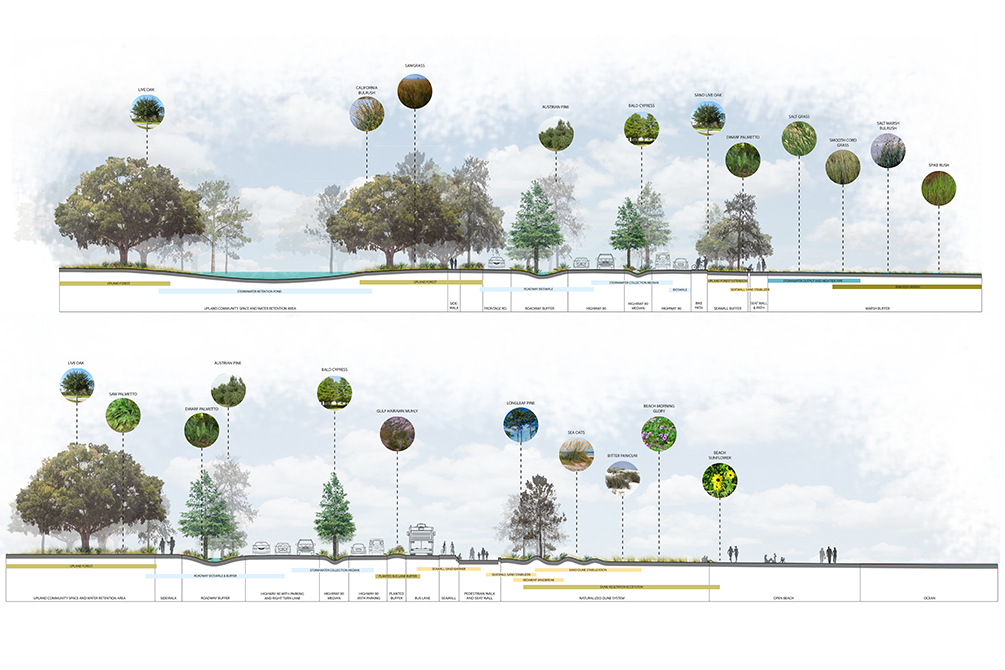 Cross sections of landscape with trees. Designs by LA 4008 Advanced Topics Studio students