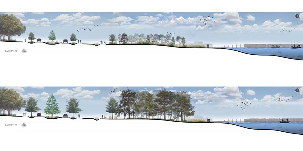 Two cross sections of coastal region with trees and harbor. LA 4008 Advanced Topics Studio work