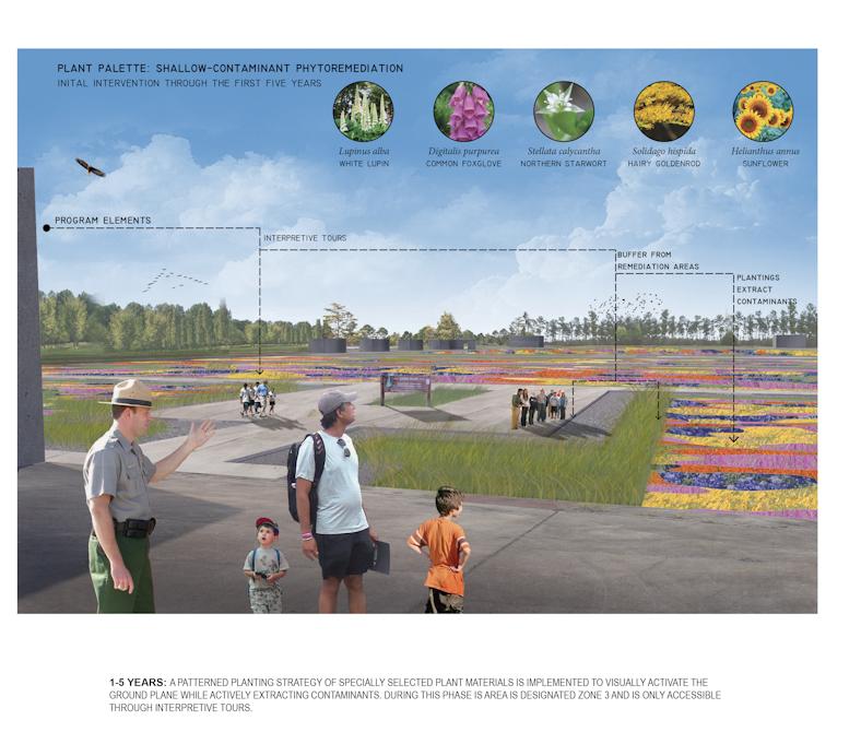 Plant Palette: Shallow-Contaminant phytoremediation. Graphic of plants, flowersLA 5002 Landscape Design VIII Capstone Project