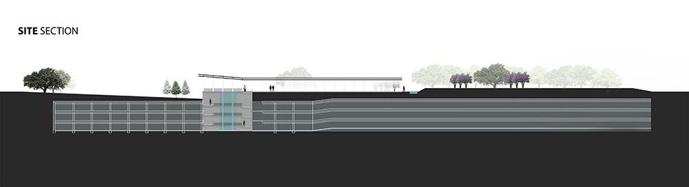Site section with lines, trees. LA 7003 Graduate Landscape Design: Water Studio