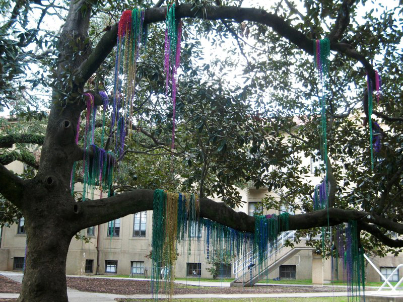 Colorful Mardi Gras beads hanging from tree branches. LSU BFA Studio Art Sculpture