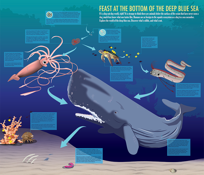 "Infographic ""feast at the bottom of the deep blue sea"" with illustrated wale, squid, sea turtle, eel, coral, crab. LSU BFA Studio Art Graphic Design"