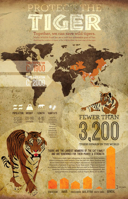 "Infographic design ""protect the tiger"" with tiger graphic, map, statistics. LSU BFA Studio Art Graphic Design"