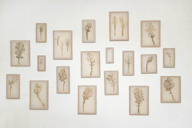 Prints of plants on white wall, LSU BFA MFA Studio Art Printmaking Papermaking
