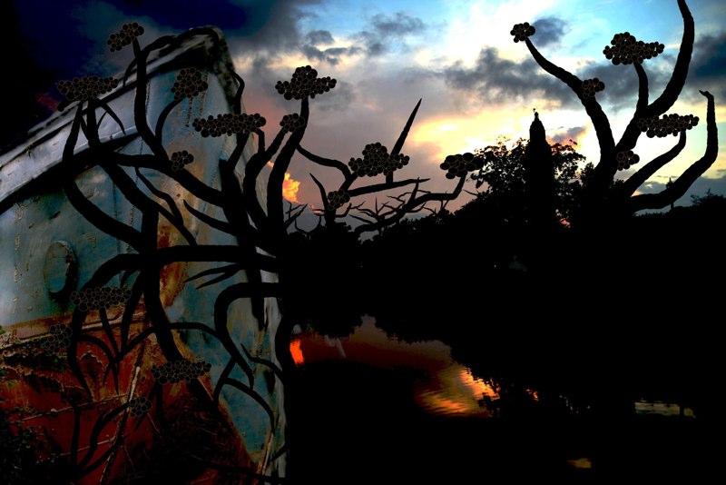 Plant shape shadows against sunset sky, LSU BFA Studio Art Digital Art