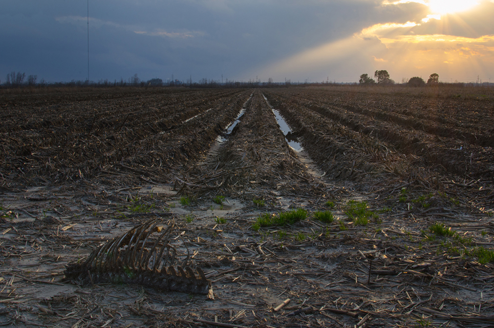 photo of field with straw, crop rows. LSU BFA Studio Art Photography