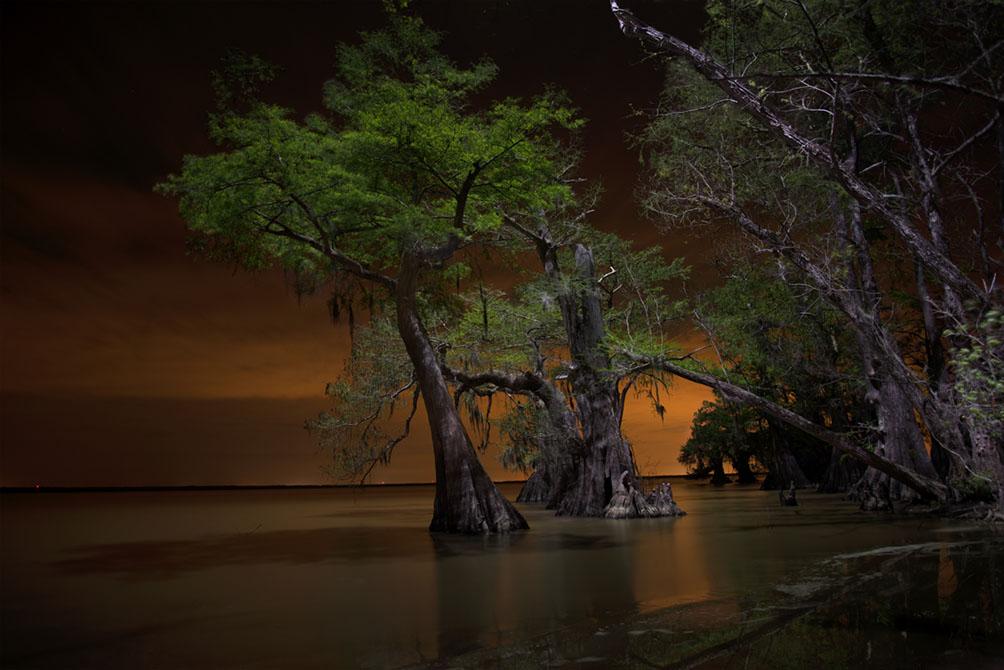 swamp at night. Justin Patin, BFA 2017