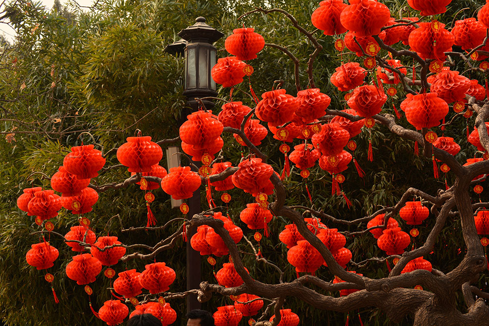 red oriental lanterns in trees