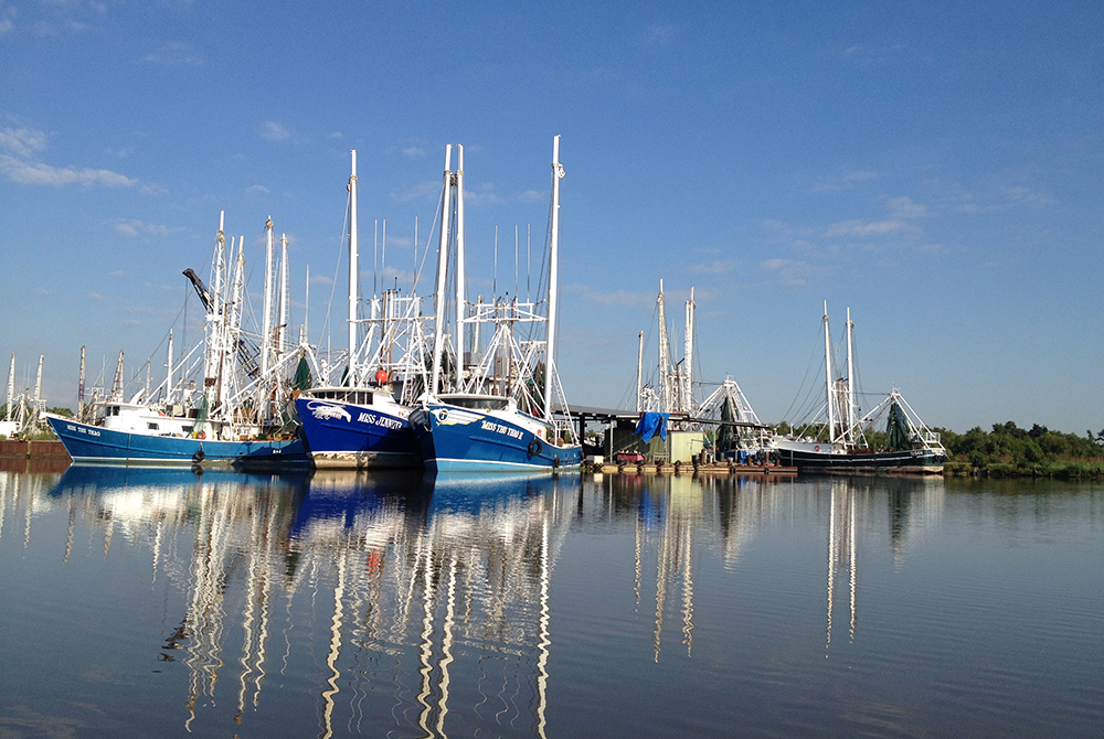 lsu coastal sustainability studio new projects fund