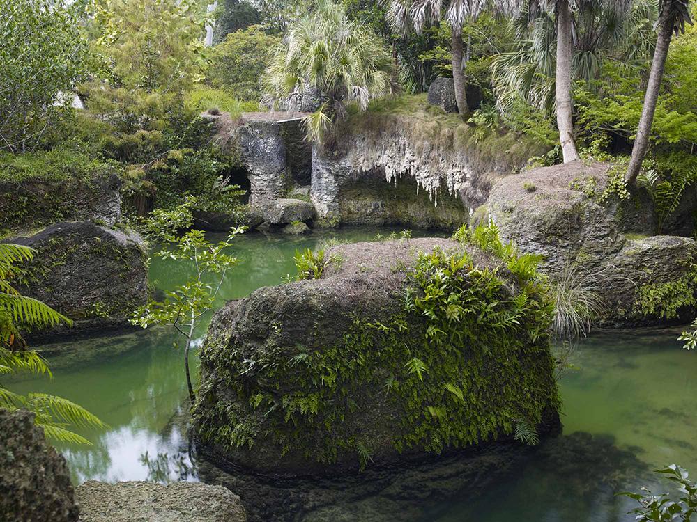 Tropical pond, by raymond jungles