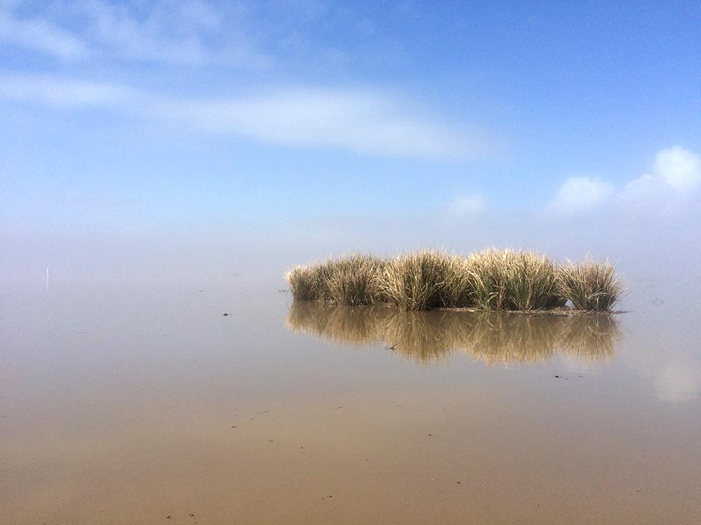 marsh grass in water