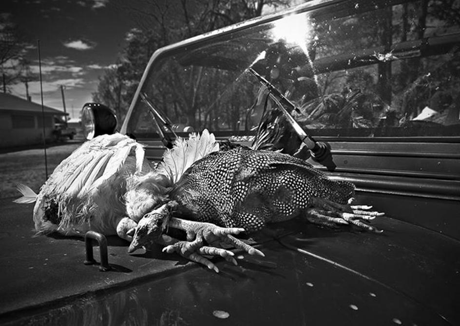 Gabrielle Savoy chicken photo
