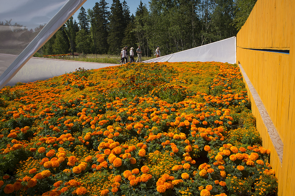 orange secret jardins de metis
