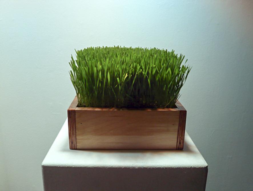 joey tipton, laughing grass