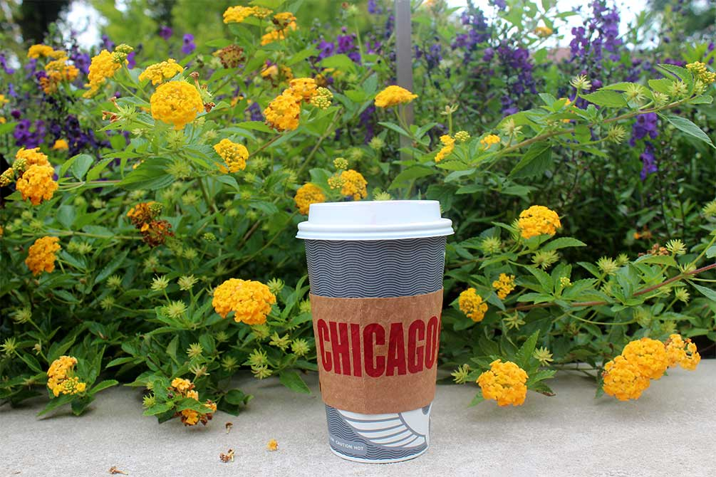 lsu in chicago, coffee cup near flowers
