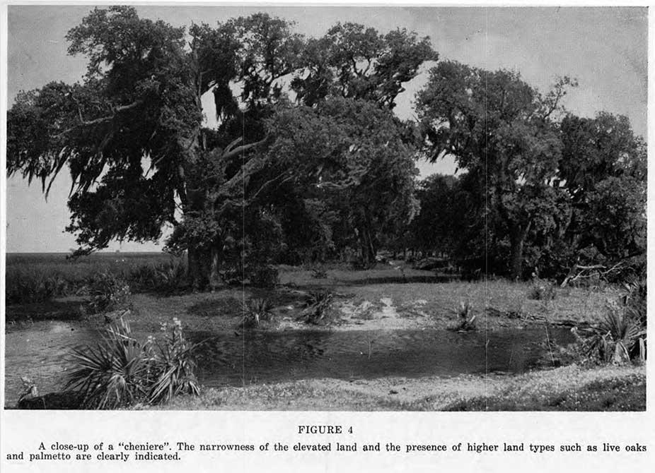 swamp oaks, catherine seavitt nordenson