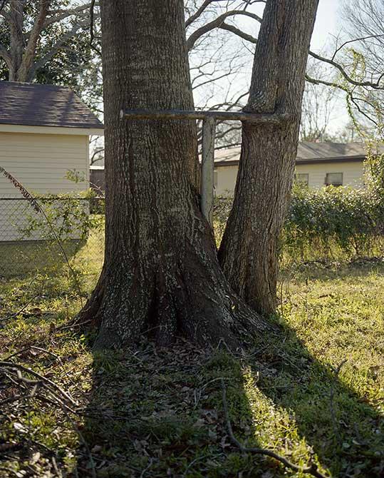 tree in backyard. lsu photography student work