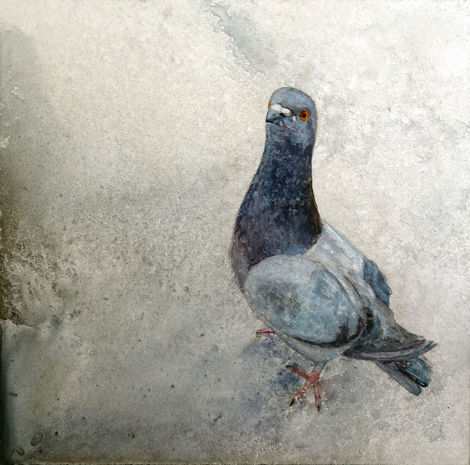 painting of pigeon by shelby prindaville