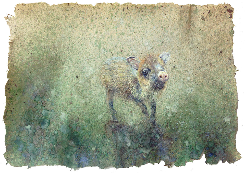 watercolor of baby animal by shelby prindaville