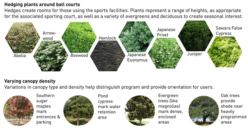 Planting typologies for ball courts