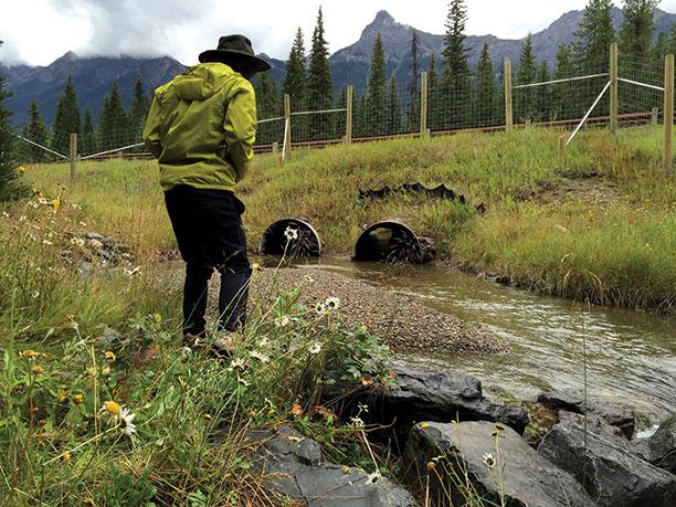 wildlife crossings