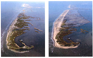 coastal restoration before and after