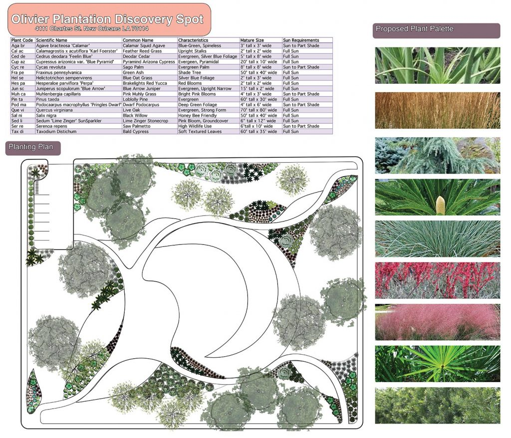 Olivier Plantation planting plan