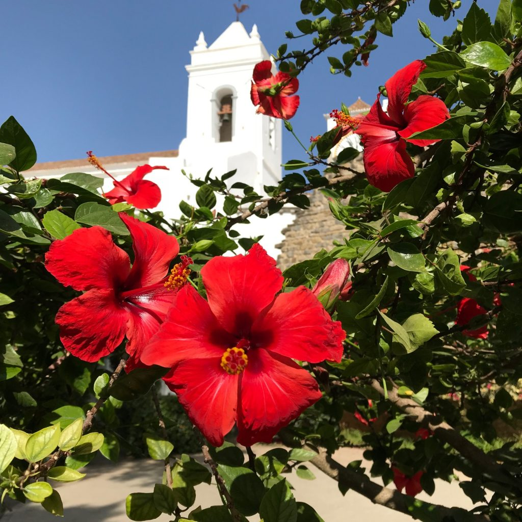 Bright red flowers and white tower in background