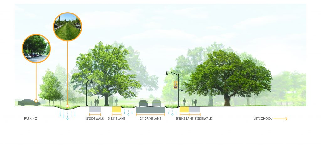 Cross-section of master plan design. Illustrated trees.