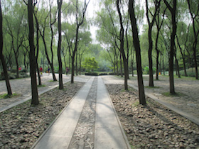 Trees cast shadows on path