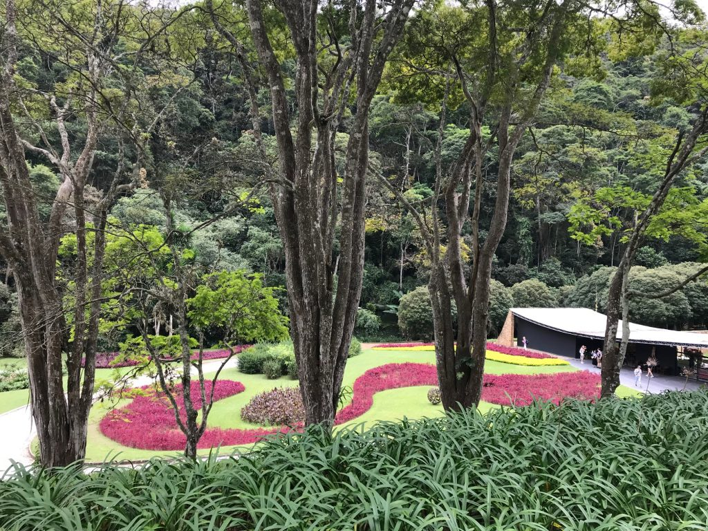 Garden with red and green pattern, trees
