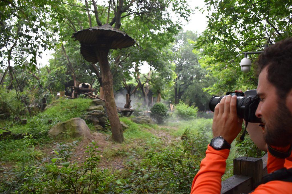 young man viewing panda in wild